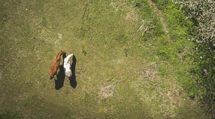 drones ranching
