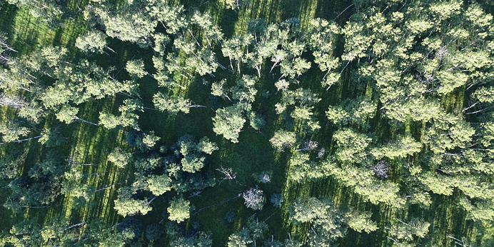 drones forestry